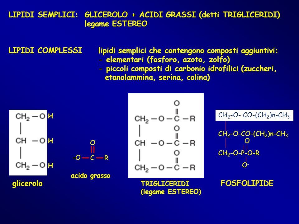 LIPIDI SEMPLICI: GLICEROLO + ACIDI GRASSI (detti TRIGLICERIDI) legame ESTEREO LIPIDI COMPLESSIlipidi semplici che contengono composti aggiuntivi: - el