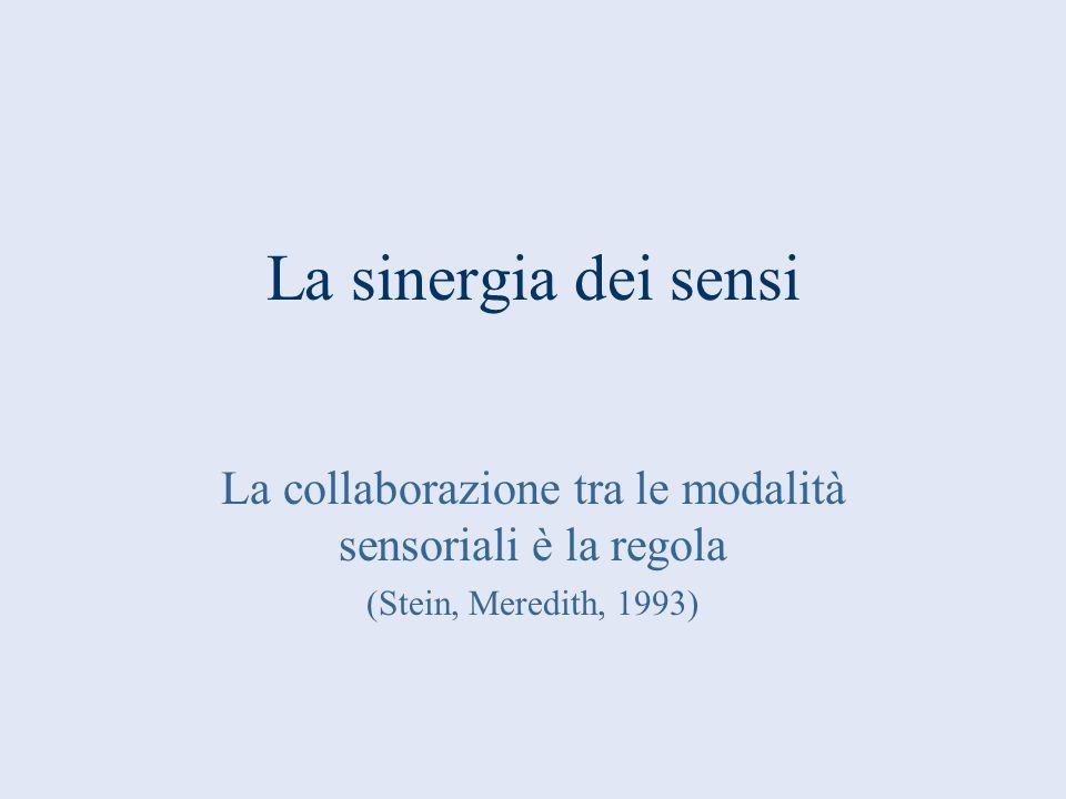 La sinergia dei sensi La collaborazione tra le modalità sensoriali è la regola (Stein, Meredith, 1993)