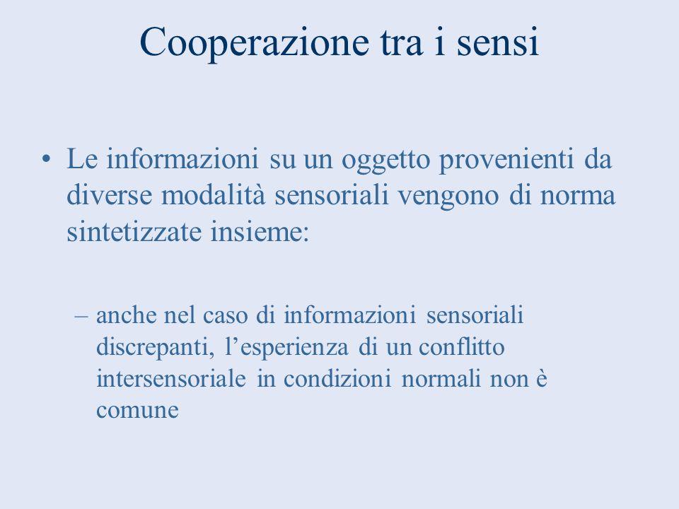 Cooperazione tra i sensi Le informazioni su un oggetto provenienti da diverse modalità sensoriali vengono di norma sintetizzate insieme: –anche nel ca