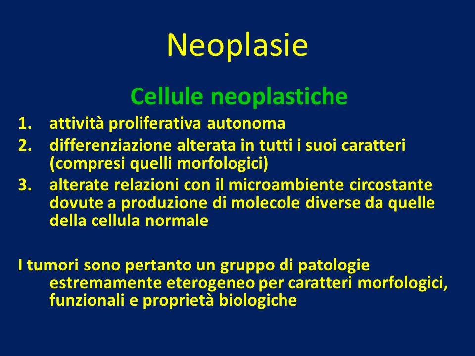 Neoplasie Cellule neoplastiche 1.attività proliferativa autonoma 2.differenziazione alterata in tutti i suoi caratteri (compresi quelli morfologici) 3