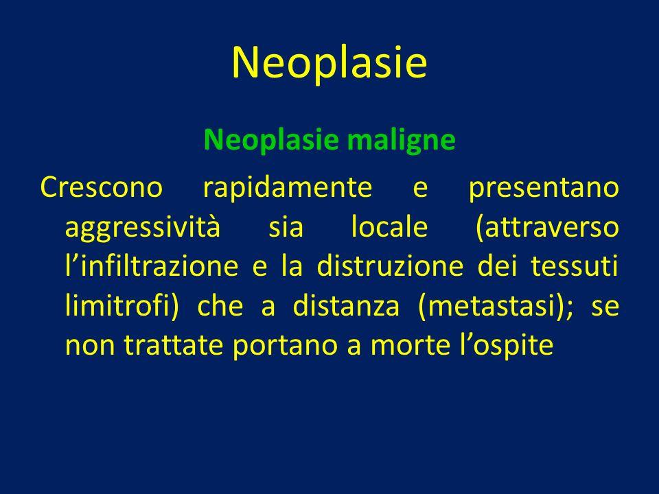 Neoplasie Neoplasie maligne Crescono rapidamente e presentano aggressività sia locale (attraverso linfiltrazione e la distruzione dei tessuti limitrof