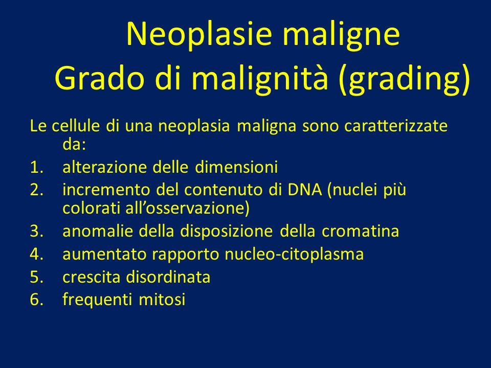 Neoplasie maligne Grado di malignità (grading) Le cellule di una neoplasia maligna sono caratterizzate da: 1.alterazione delle dimensioni 2.incremento