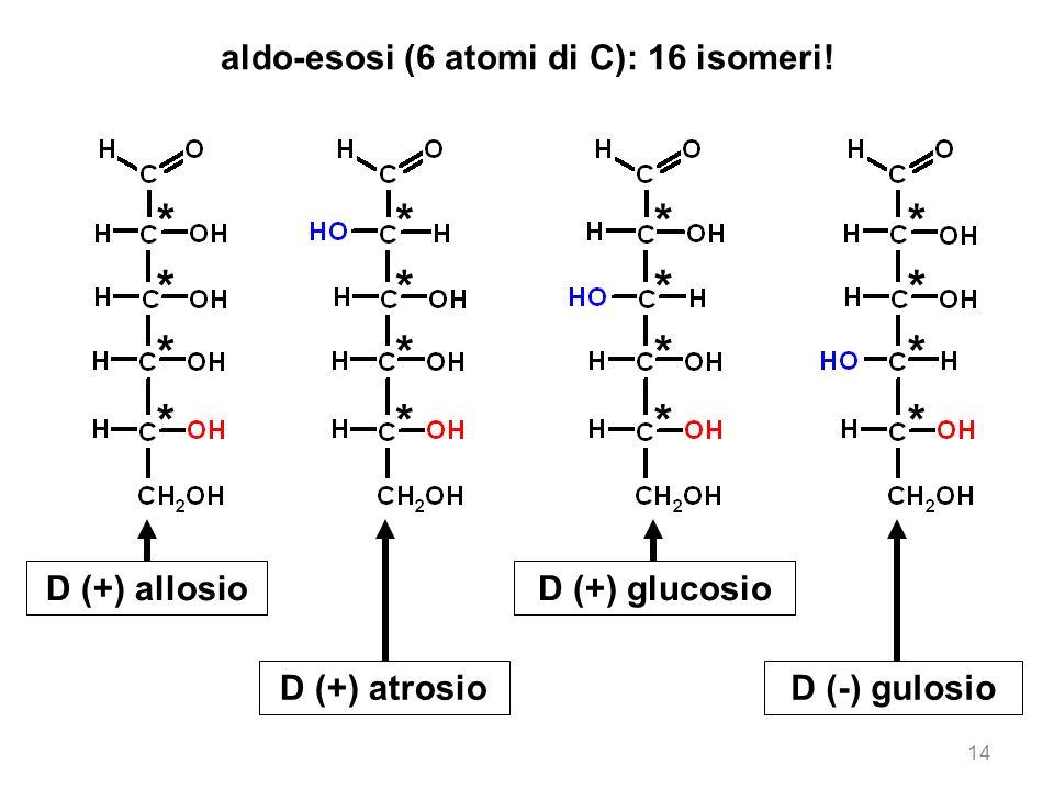 14 aldo-esosi (6 atomi di C): 16 isomeri! D (+) allosio D (+) atrosio D (+) glucosio D (-) gulosio * * * * * * * * * * * * * * * *