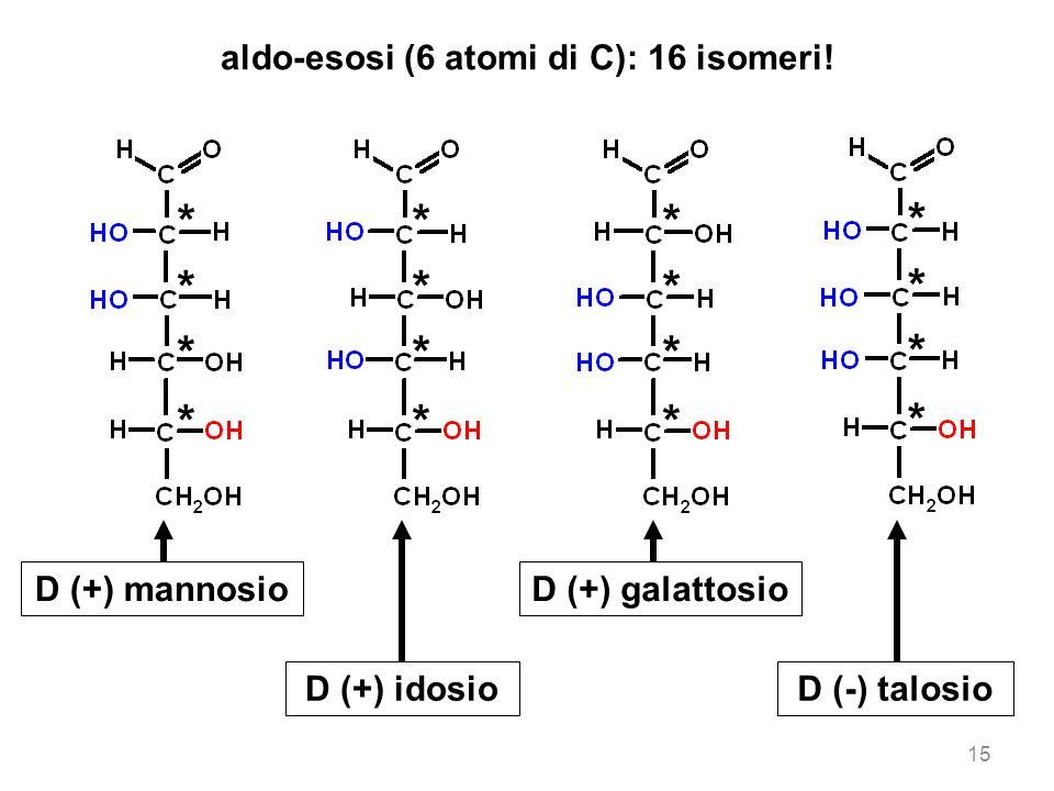 15 aldo-esosi (6 atomi di C): 16 isomeri! D (+) mannosio D (+) idosio D (+) galattosio D (-) talosio * * * * * * * * * * * * * * * *