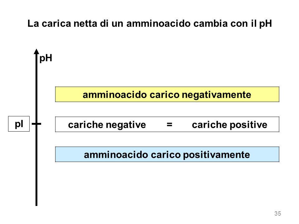 amminoacido carico negativamente cariche negative=cariche positive amminoacido carico positivamente La carica netta di un amminoacido cambia con il pH