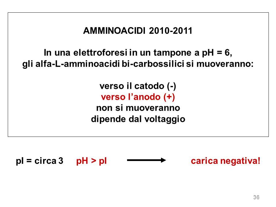 36 AMMINOACIDI 2010-2011 In una elettroforesi in un tampone a pH = 6, gli alfa-L-amminoacidi bi-carbossilici si muoveranno: verso il catodo (-) verso