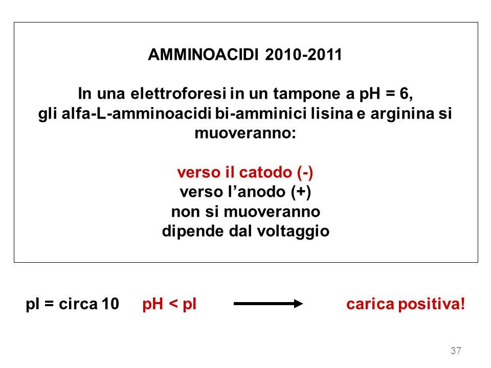 37 AMMINOACIDI 2010-2011 In una elettroforesi in un tampone a pH = 6, gli alfa-L-amminoacidi bi-amminici lisina e arginina si muoveranno: verso il cat