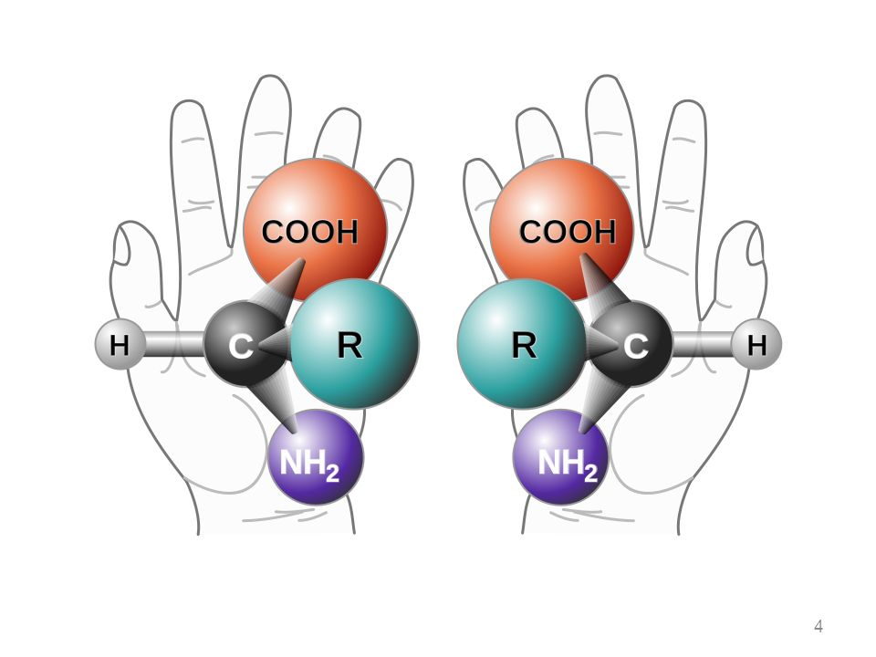 amminoacido carico negativamente cariche negative=cariche positive amminoacido carico positivamente La carica netta di un amminoacido cambia con il pH pH pI 35