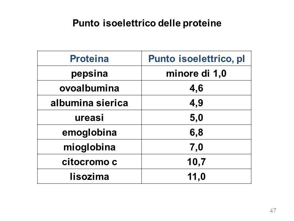 47 Punto isoelettrico delle proteine ProteinaPunto isoelettrico, pI pepsinaminore di 1,0 ovoalbumina4,6 albumina sierica4,9 ureasi5,0 emoglobina6,8 mi
