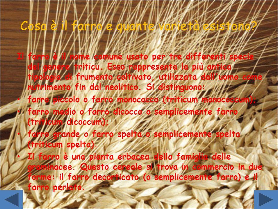 Cosa è il farro e quante varietà esistono? Il farro è il nome comune usato per tre differenti specie del genere triticu. Esso rappresenta la più antic