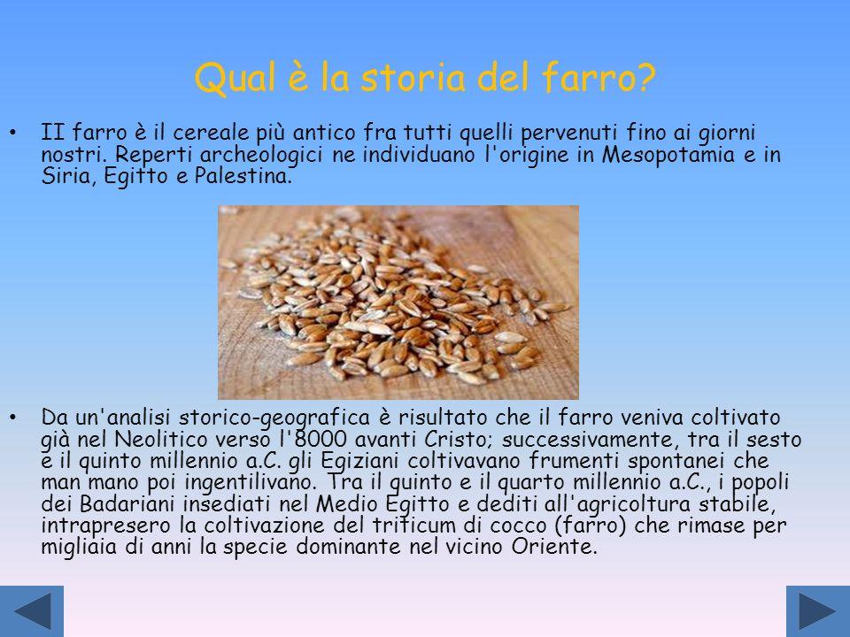 Qual è la storia del farro? II farro è il cereale più antico fra tutti quelli pervenuti fino ai giorni nostri. Reperti archeologici ne individuano l'o