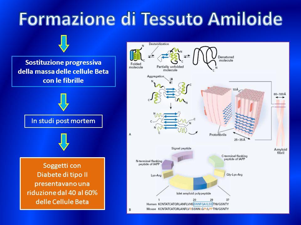 Sostituzione progressiva della massa delle cellule Beta con le fibrille In studi post mortem Soggetti con Diabete di tipo II presentavano una riduzion