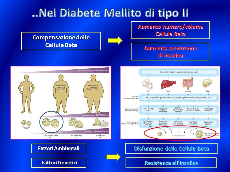 Disfunzione delle Cellule Beta Resistenza allinsulina Fattori Genetici Fattori Genetici Fattori Ambientali Aumento numero/volume Cellule Beta Compensa