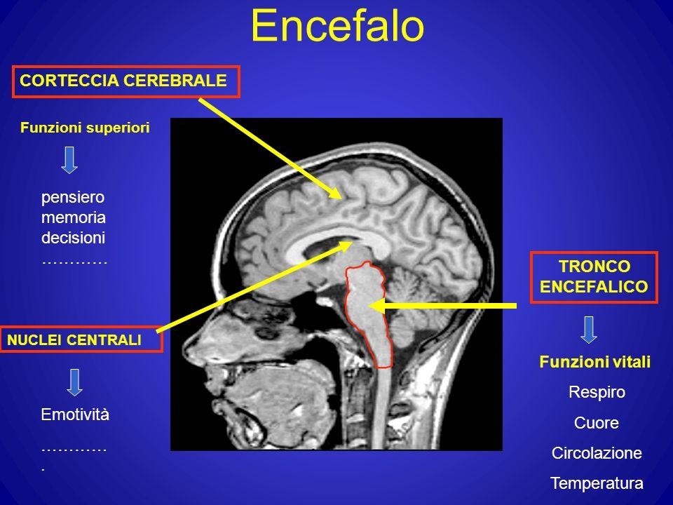Encefalo CORTECCIA CEREBRALE Funzioni superiori pensiero memoria decisioni ………… NUCLEI CENTRALI Emotività …………. TRONCO ENCEFALICO Funzioni vitali Resp