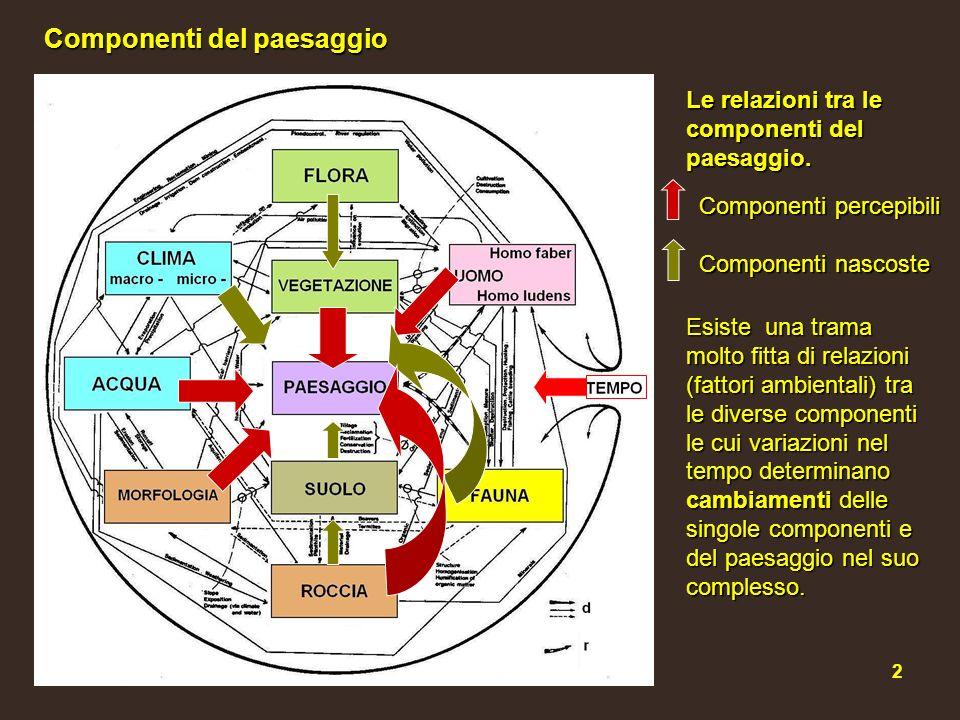 3 Vegetazione Clima Geomorfologia Antropizzazione (agricoltura, urbanizzazione) Flora Relazioni tra componenti principali In ecologia del paesaggio componente = sottosistema.