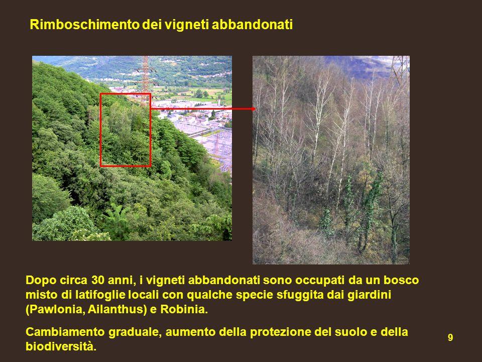 20 Riduzione dei rami morti fluviali I tratti di Adda morta furono determinati dalla rettifica del corso del fiume.