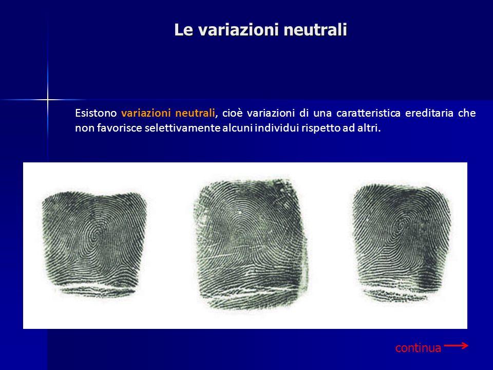 Le variazioni neutrali continua Esistono variazioni neutrali, cioè variazioni di una caratteristica ereditaria che non favorisce selettivamente alcuni