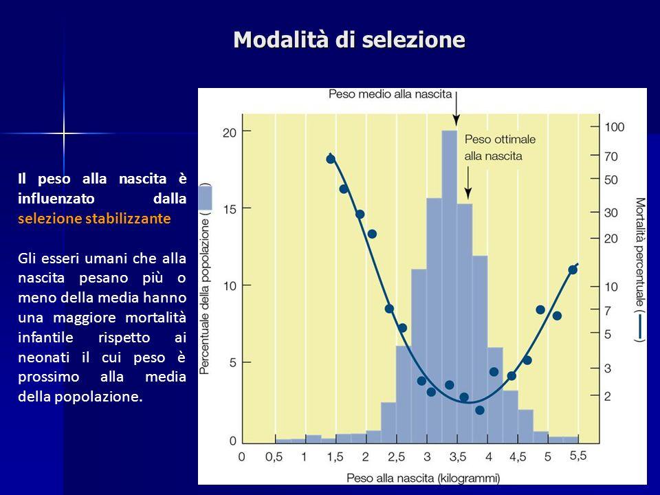 Il peso alla nascita è influenzato dalla selezione stabilizzante Gli esseri umani che alla nascita pesano più o meno della media hanno una maggiore mo