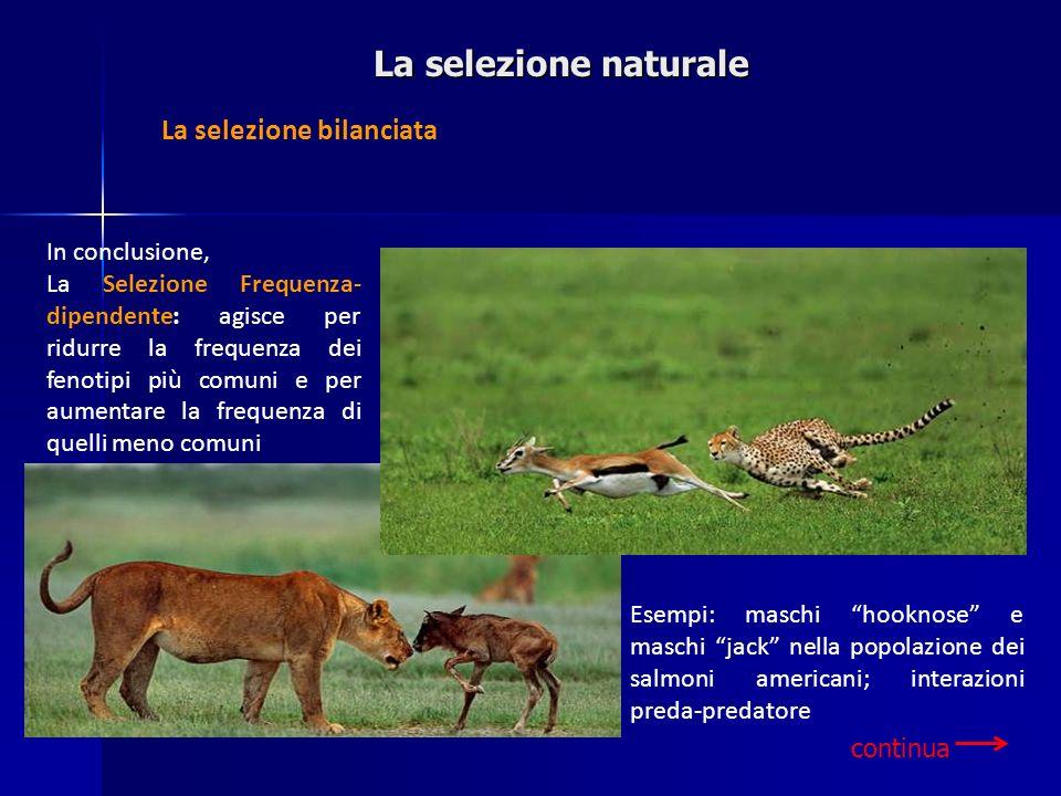 In conclusione, La Selezione Frequenza- dipendente: agisce per ridurre la frequenza dei fenotipi più comuni e per aumentare la frequenza di quelli men