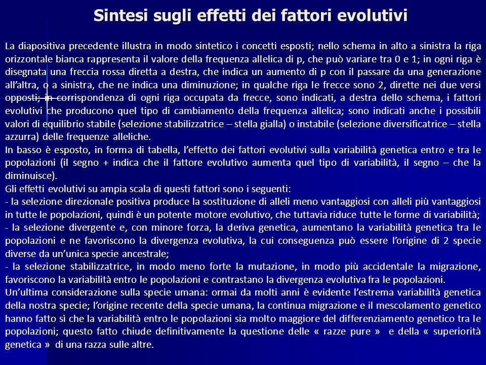 Sintesi sugli effetti dei fattori evolutivi La diapositiva precedente illustra in modo sintetico i concetti esposti; nello schema in alto a sinistra l
