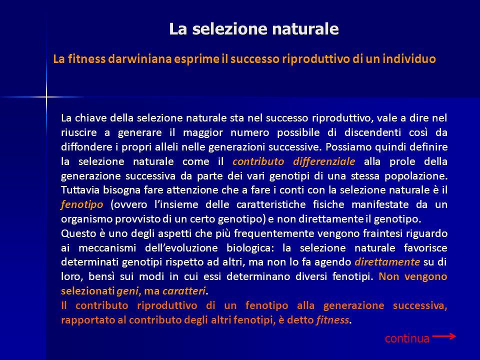 La selezione naturale continua La fitness darwiniana esprime il successo riproduttivo di un individuo La chiave della selezione naturale sta nel succe