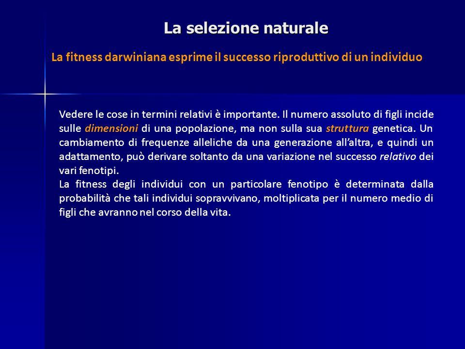 La selezione naturale La fitness darwiniana esprime il successo riproduttivo di un individuo Vedere le cose in termini relativi è importante. Il numer
