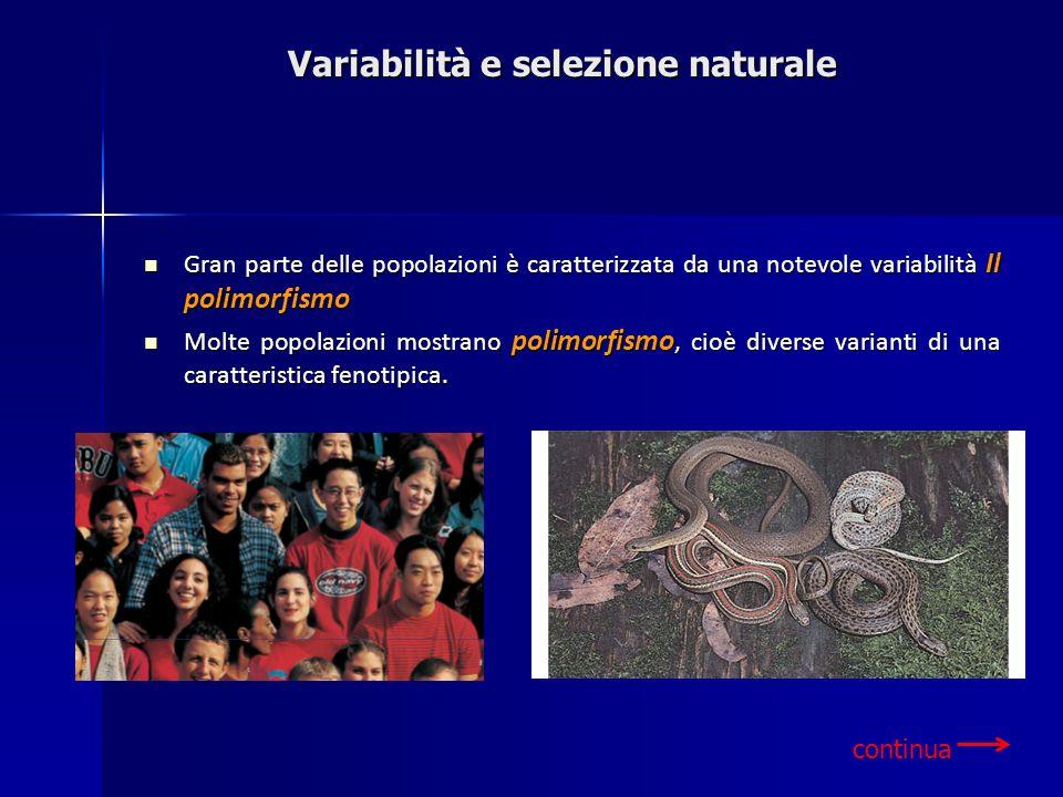 Variabilità e selezione naturale Gran parte delle popolazioni è caratterizzata da una notevole variabilità Il polimorfismo Gran parte delle popolazion