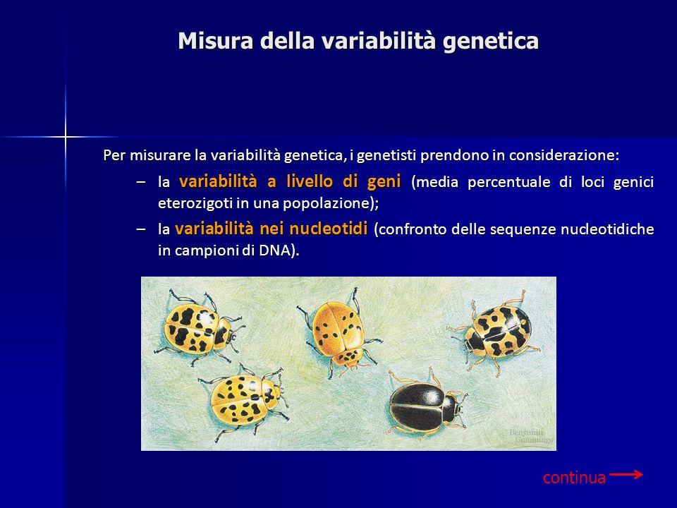 Misura della variabilità genetica continua Per misurare la variabilità genetica, i genetisti prendono in considerazione: –la variabilità a livello di
