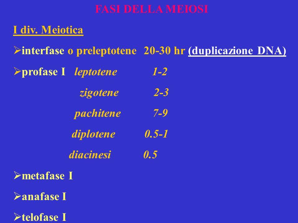 FASI DELLA MEIOSI I div. Meiotica interfase o preleptotene 20-30 hr (duplicazione DNA) profase I leptotene 1-2 zigotene 2-3 pachitene 7-9 diplotene 0.