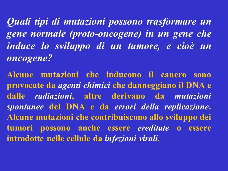 Quali tipi di mutazioni possono trasformare un gene normale (proto-oncogene) in un gene che induce lo sviluppo di un tumore, e cioè un oncogene? Alcun