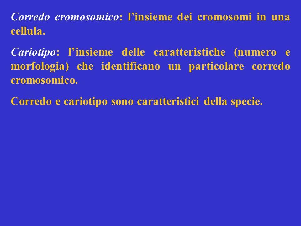 Corredo cromosomico: linsieme dei cromosomi in una cellula. Cariotipo: linsieme delle caratteristiche (numero e morfologia) che identificano un partic
