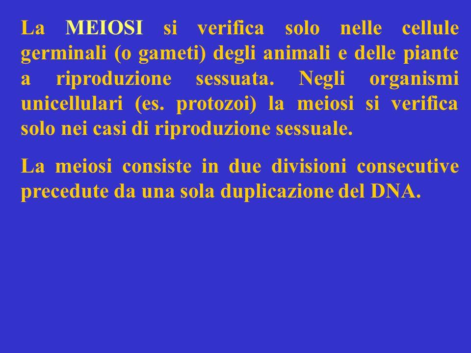 La MEIOSI si verifica solo nelle cellule germinali (o gameti) degli animali e delle piante a riproduzione sessuata. Negli organismi unicellulari (es.