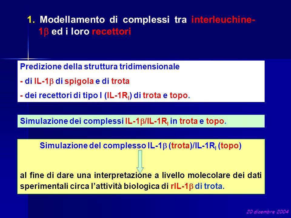 Simulazione dei complessi IL-1 /IL-1R I in trota e topo. Predizione della struttura tridimensionale - di IL-1 di spigola e di trota - dei recettori di