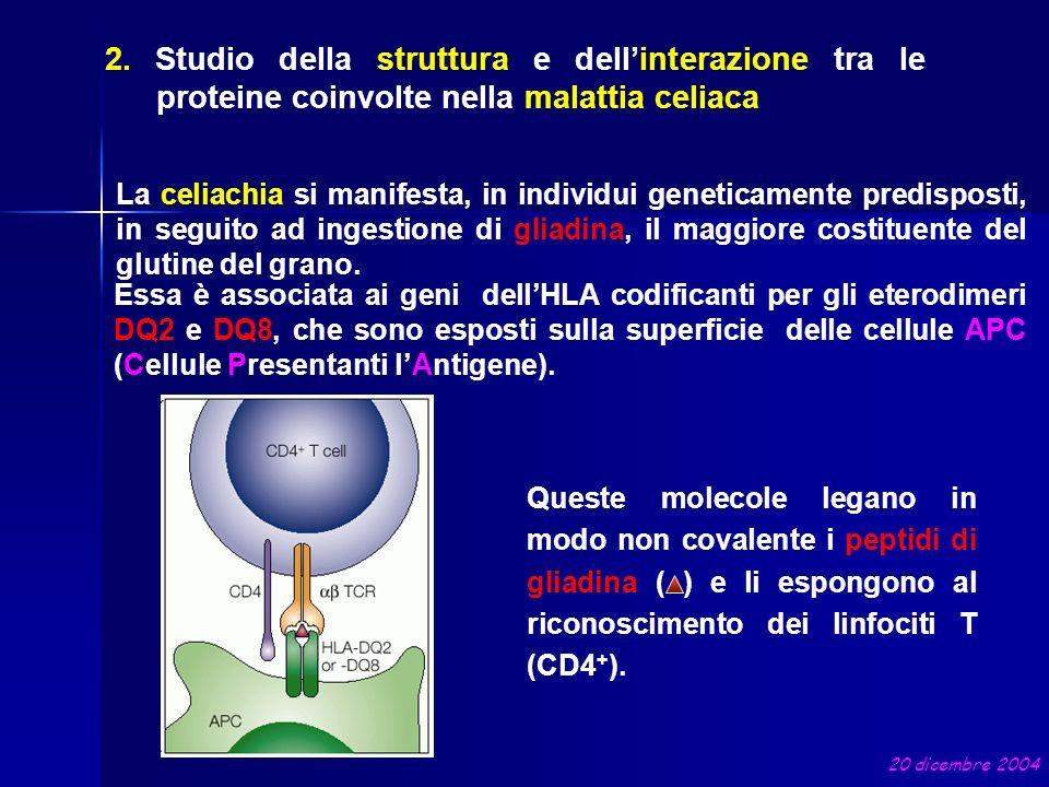 La celiachia si manifesta, in individui geneticamente predisposti, in seguito ad ingestione di gliadina, il maggiore costituente del glutine del grano