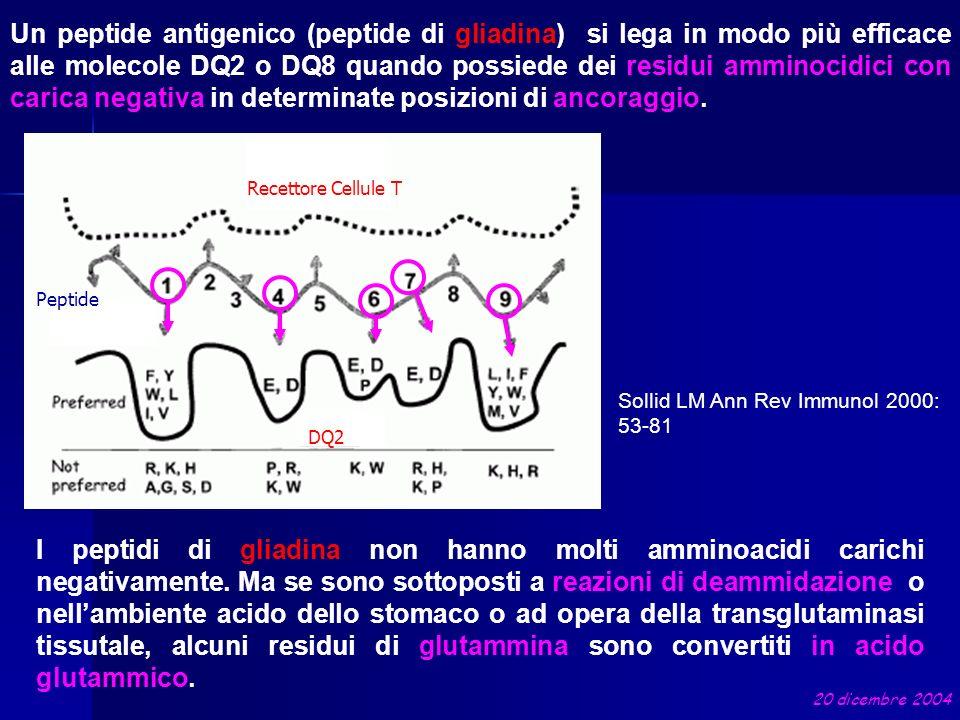 Un peptide antigenico (peptide di gliadina) si lega in modo più efficace alle molecole DQ2 o DQ8 quando possiede dei residui amminocidici con carica n