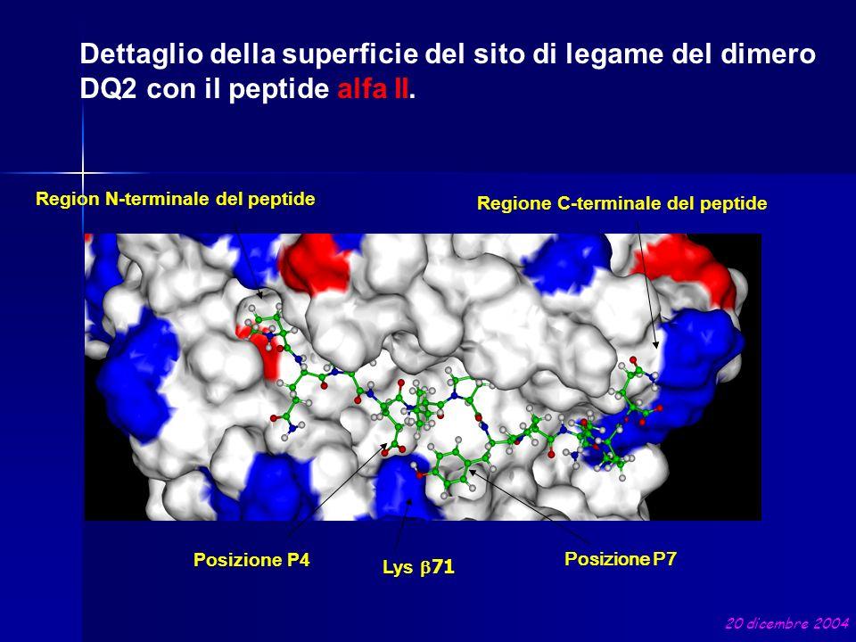 Dettaglio della superficie del sito di legame del dimero DQ2 con il peptide alfa II. Lys 71 Posizione P7 Posizione P4 Region N-terminale del peptide R