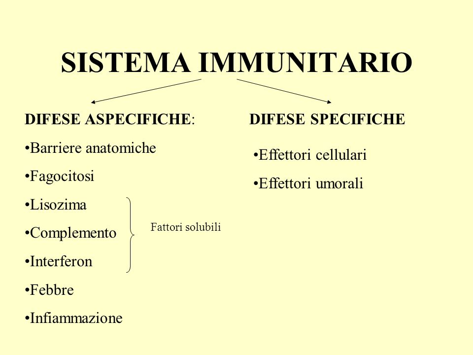 SISTEMA IMMUNITARIO DIFESE ASPECIFICHE: Barriere anatomiche Fagocitosi Lisozima Complemento Interferon Febbre Infiammazione DIFESE SPECIFICHE Fattori solubili Effettori cellulari Effettori umorali