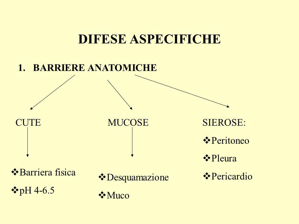 DIFESE ASPECIFICHE 1.BARRIERE ANATOMICHE CUTEMUCOSESIEROSE: Peritoneo Pleura Pericardio Barriera fisica pH 4-6.5 Desquamazione Muco