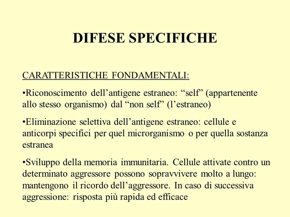 DIFESE SPECIFICHE CARATTERISTICHE FONDAMENTALI: Riconoscimento dellantigene estraneo: self (appartenente allo stesso organismo) dal non self (lestrane