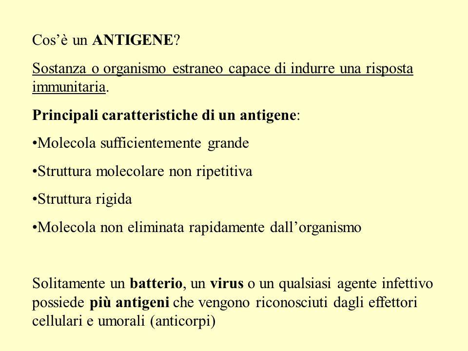 RECLUTAMENTO DEGLI EFFETTORI (RISPOSTA UMORALE) 4.