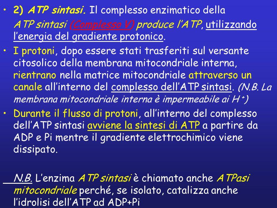 2) ATP sintasi.