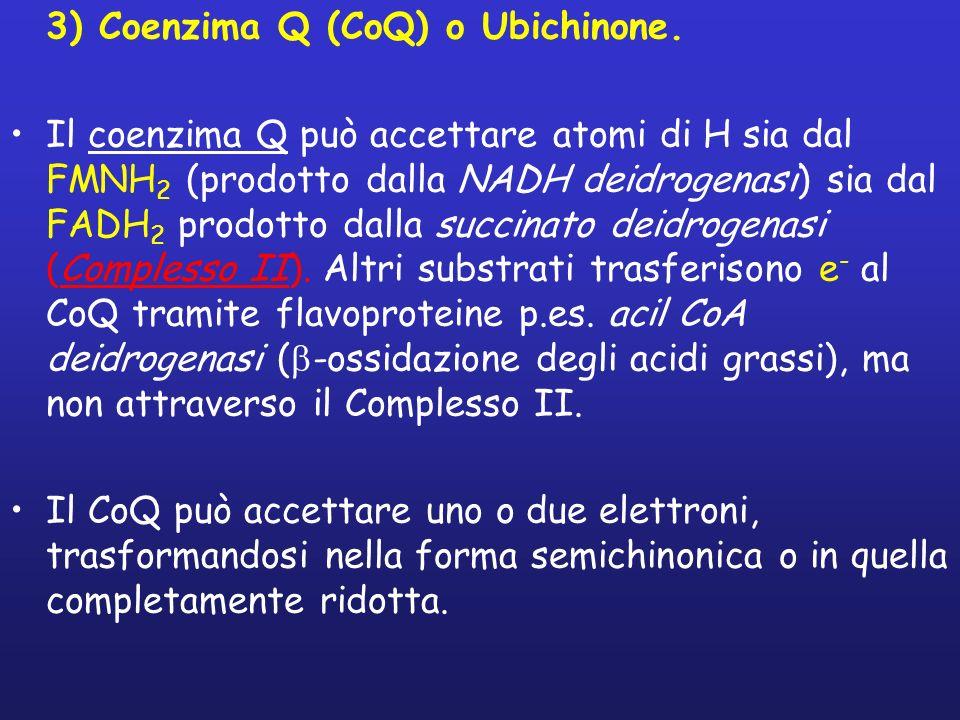 3) Coenzima Q (CoQ) o Ubichinone. Il coenzima Q può accettare atomi di H sia dal FMNH 2 (prodotto dalla NADH deidrogenasi) sia dal FADH 2 prodotto dal