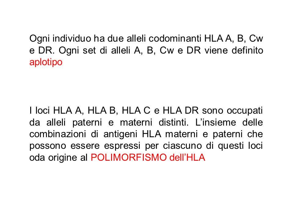 Ogni individuo ha due alleli codominanti HLA A, B, Cw e DR. Ogni set di alleli A, B, Cw e DR viene definito aplotipo I loci HLA A, HLA B, HLA C e HLA