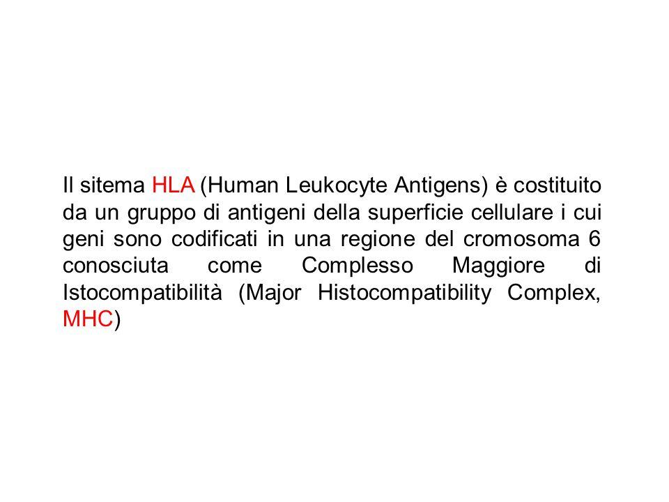 Il sitema HLA (Human Leukocyte Antigens) è costituito da un gruppo di antigeni della superficie cellulare i cui geni sono codificati in una regione de