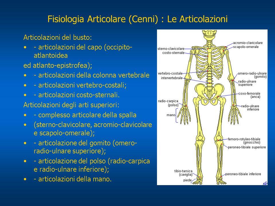 Articolazioni del busto: - articolazioni del capo (occipito- atlantoidea ed atlanto-epistrofea); - articolazioni della colonna vertebrale - articolazi