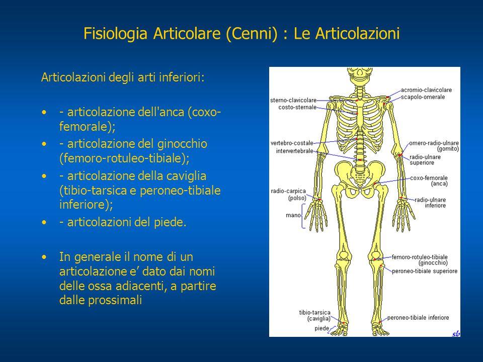 Fisiologia Articolare (Cenni) : Le Articolazioni Articolazioni degli arti inferiori: - articolazione dell'anca (coxo- femorale); - articolazione del g