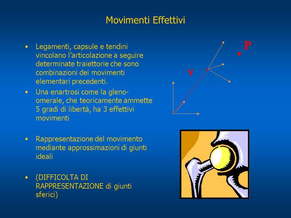 Movimenti Effettivi Legamenti, capsule e tendini vincolano larticolazione a seguire determinate traiettorie che sono combinazioni dei movimenti elemen