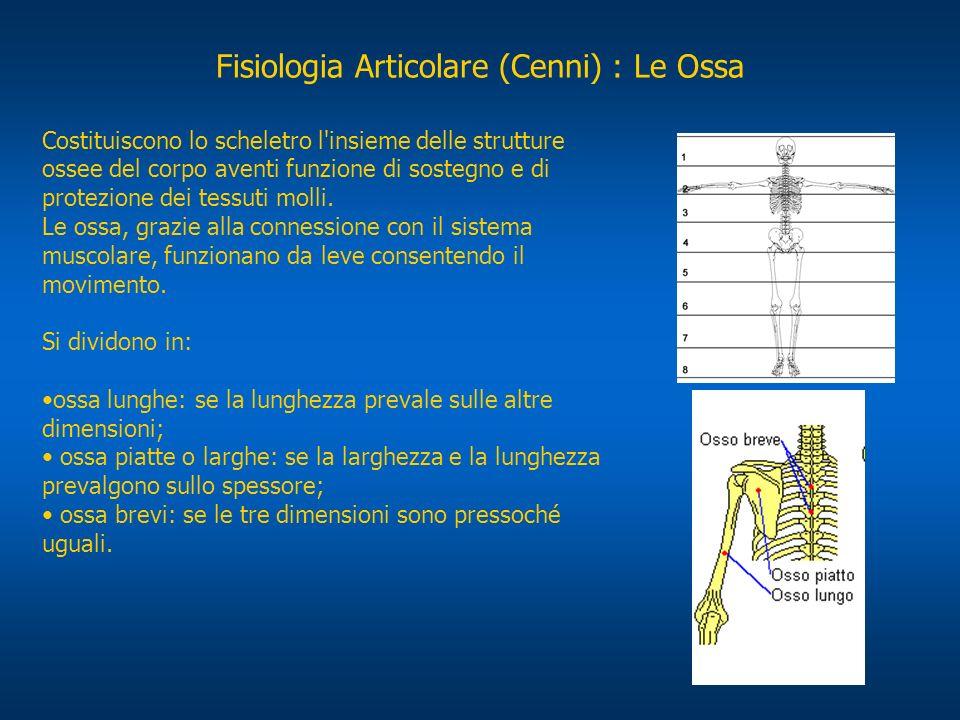 Fisiologia Articolare (Cenni) : Le Ossa Costituiscono lo scheletro l'insieme delle strutture ossee del corpo aventi funzione di sostegno e di protezio