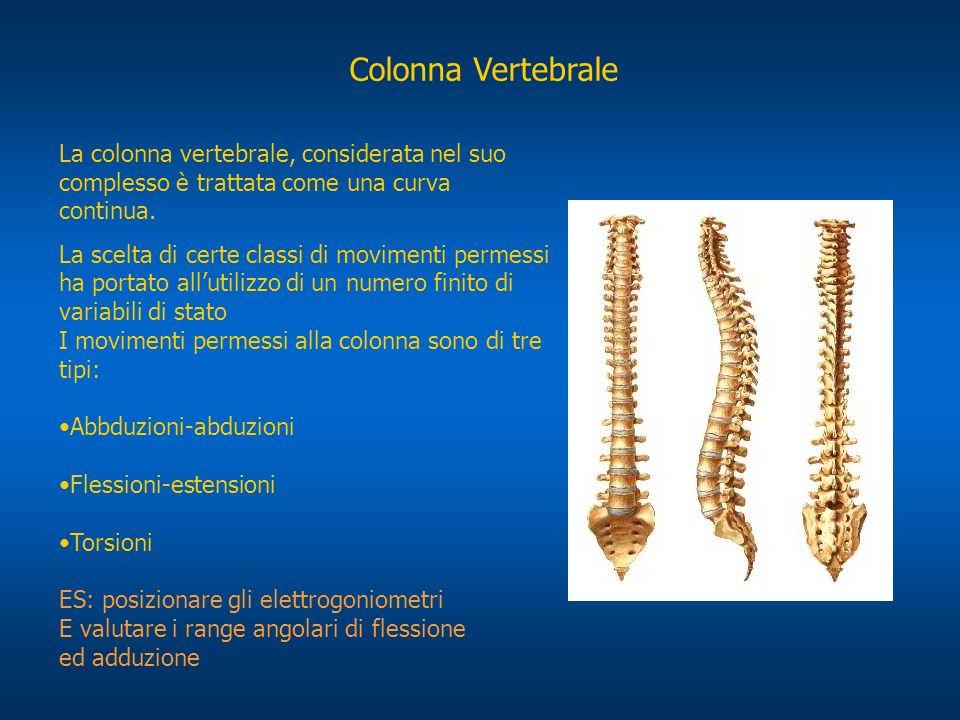 Colonna Vertebrale La colonna vertebrale, considerata nel suo complesso è trattata come una curva continua. La scelta di certe classi di movimenti per