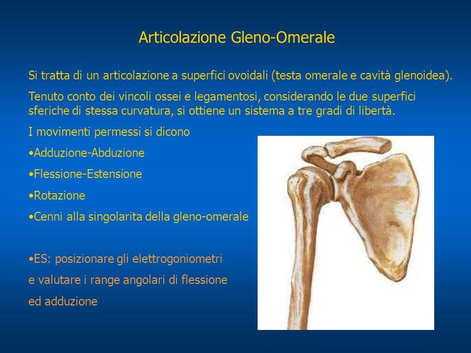 Articolazione Gleno-Omerale Si tratta di un articolazione a superfici ovoidali (testa omerale e cavità glenoidea). Tenuto conto dei vincoli ossei e le